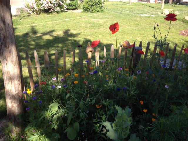 Blumen im Garten der Freien Schule Fläming